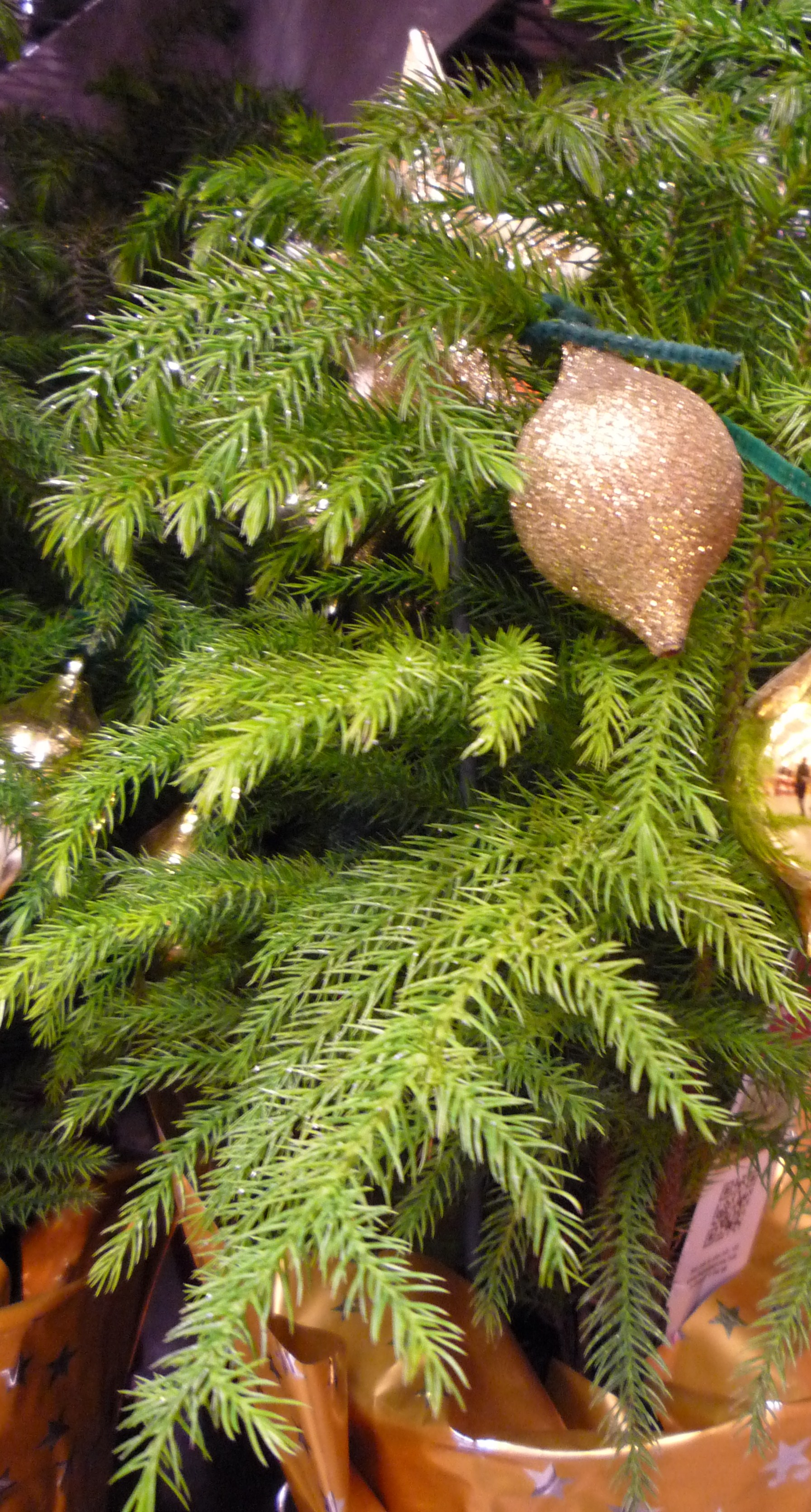 Norfolk Island pine | The Garden Bench