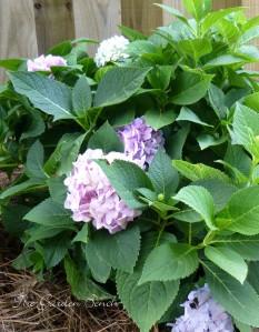 Hydrangea garden bench