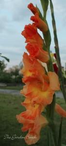 glads orange garden bench