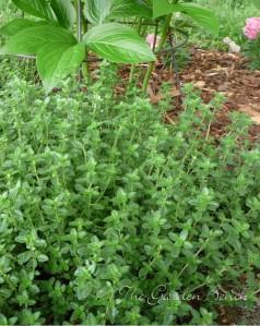 Thyme The Garden Bench