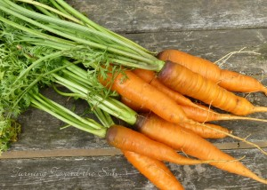 Carrots are among the cool-season vegetables to plant in March.