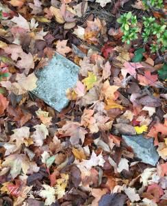 fall-leaves