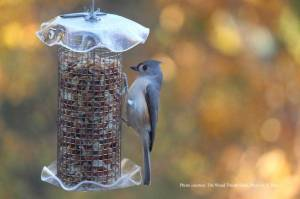 tufted-titmouse-wood-thrust-shop-s-poe